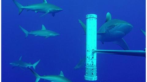 日不落國不是叫假的 英國啟動世界最大海洋生態監測網