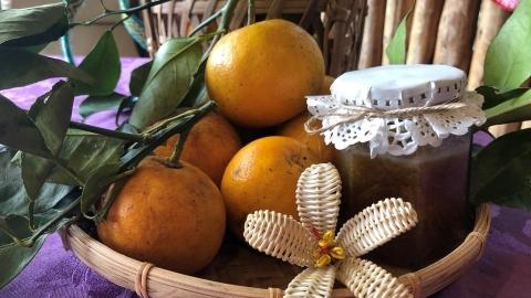 賽夏族才懂的酸 稀有南庄橙種回部落 開啟保育與林產新篇章