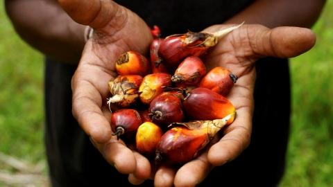 樂天和番茄醬品牌Heinz墊底 永續棕櫚油企業表現報告出爐