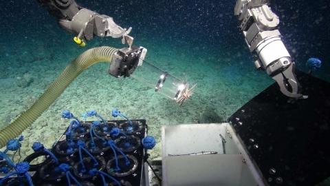 測試COVID-19病毒、殺死超級細菌 深海物種是抗疫關鍵角色