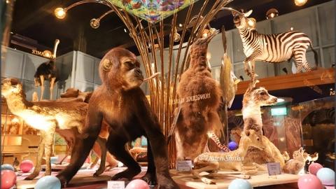物種的生命、誘惑、死亡 神遊一趟荷蘭自然生物多樣性中心
