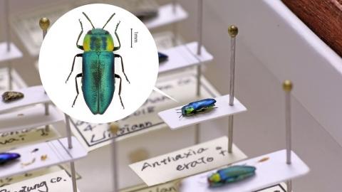 熱愛吉丁蟲的設計師:專訪《台灣吉丁蟲圖鑑》王惟正