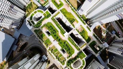 重磅報告建議英政府改造城市屋頂 打造野生動物避風港