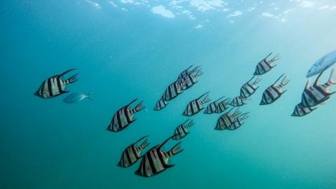 塗料是被忽視的海洋塑膠污染 北大西洋每立方公尺就有0.01件