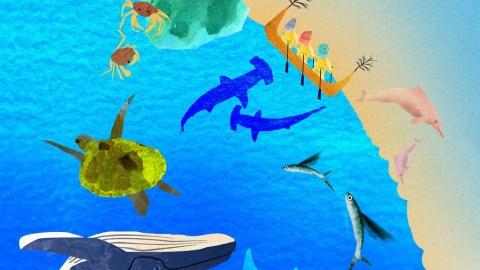 【生物多樣性的美好日常】劃設保護區 讓海洋生物「依法群聚」