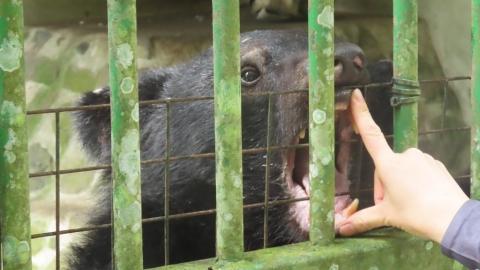 圈養黑熊與牠們的照養員——「受訓操課」用盡力氣,只為這群山林的靈魂