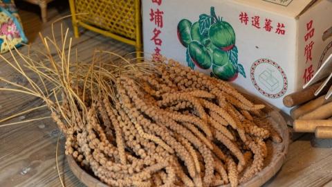 田埔部落黑柿蕃茄和復育小米傳奇,以經濟自主抗拒賣地誘惑